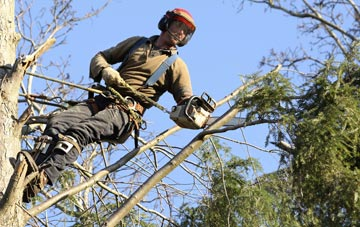 hiring experienced Barking Dagenham tree surgeons