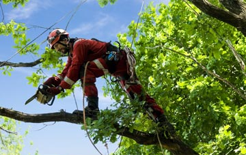 find trusted rated Barking Dagenham tree surgeons
