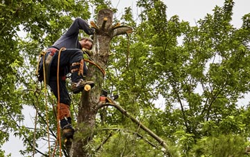 tree surgeon Barking Dagenham