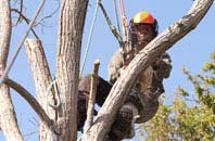 Barking Dagenham tree surgeon services