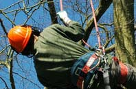 free Barking Dagenham tree surgeon quotes